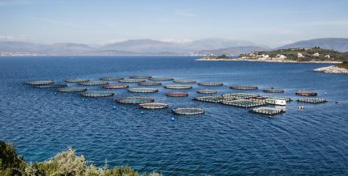 Restricciones a proyectos Piscícolas o acuícolas en jaulas flotantes en el Lago Guamués o Laguna de la Cocha en Pasto, Nariño